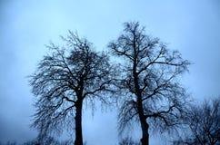 Árboles Fotografía de archivo