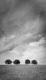 Árboles 103 Fotografía de archivo