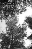 Árboles Imágenes de archivo libres de regalías