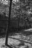 Árboles Fotos de archivo