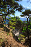 Árboles 9 de la costa costa Foto de archivo libre de regalías