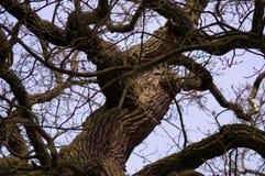 Árboles 11 Foto de archivo libre de regalías