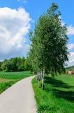 Árboles (abedules) cerca del camino estrecho que lleva al pueblo Fotografía de archivo