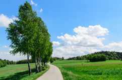 Árboles (abedules) cerca del camino estrecho que lleva al pueblo Foto de archivo
