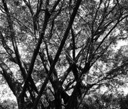 Árboles abstractos Imágenes de archivo libres de regalías