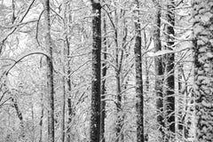 Árboles abstractos del invierno Fotos de archivo libres de regalías