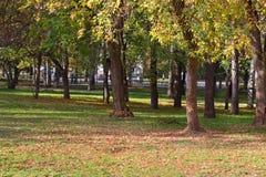 Árboles adentro en parque cercado entre hierba y hojas Fotografía de archivo libre de regalías