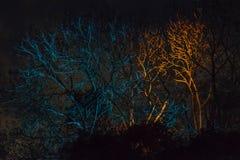 Árboles adornados con las luces Foto de archivo