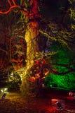 Árboles adornados con las luces en los jardines de Kew, Londres Fotos de archivo libres de regalías