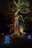 Árboles adornados con las luces en los jardines de Kew, Londres Foto de archivo libre de regalías
