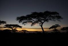 Árboles africanos en la noche Fotografía de archivo libre de regalías