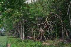 Árboles agrietados cerca del prado imágenes de archivo libres de regalías