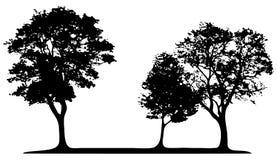 Árboles aislados stock de ilustración
