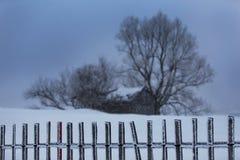 Árboles aislados del álamo temblón en las montañas Foto de archivo libre de regalías