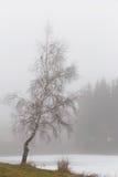 Árboles aislados del álamo temblón en las montañas Fotografía de archivo libre de regalías