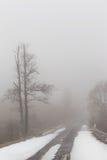 Árboles aislados del álamo temblón en las montañas Imagen de archivo