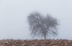 Árboles aislados del álamo temblón en las montañas Imagenes de archivo
