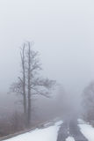 Árboles aislados del álamo temblón en las montañas Fotos de archivo