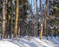 Árboles al borde de un bosque del invierno en luz del sol en un día soleado brillante Fotografía de archivo libre de regalías