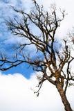 Árboles al cielo Fotografía de archivo
