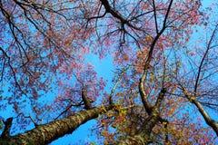 Árboles al cielo Fotografía de archivo libre de regalías