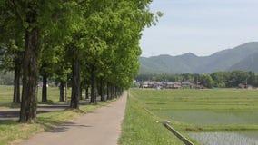 Árboles al lado del campo del arroz metrajes