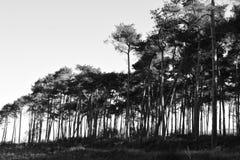 Árboles alineados Foto de archivo