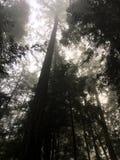 Árboles altos altos foto de archivo libre de regalías