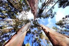 Árboles altos Fotos de archivo