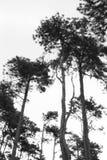 Árboles altos Imagenes de archivo