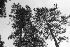 Árboles altos Imagen de archivo libre de regalías