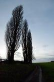 Árboles altos fotografía de archivo