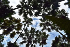 Árboles altos Imagen de archivo