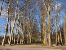 Árboles altos en línea dentro del jardín público Imagen de archivo