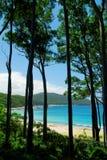 Árboles altos tropicales Imagen de archivo libre de regalías