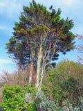 Árboles altos viejos del parque jurásico imagen de archivo libre de regalías