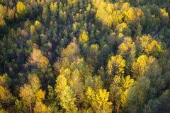 Árboles amarillos de la caída de arriba Foto de archivo libre de regalías