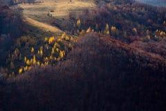 Árboles amarillos del otoño Fotos de archivo
