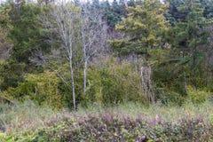 Árboles amarillos del otoño en campo inglés Foto de archivo libre de regalías