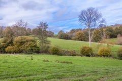 Árboles amarillos del otoño en campo inglés Imagen de archivo libre de regalías
