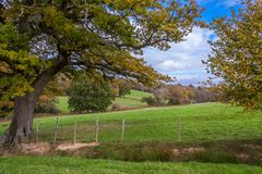 Árboles amarillos del otoño en campo inglés Fotos de archivo libres de regalías