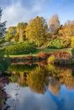 Árboles amarillos del otoño en campo inglés Imagen de archivo