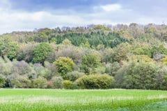 Árboles amarillos del otoño en campo inglés Imágenes de archivo libres de regalías