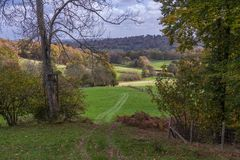 Árboles amarillos del otoño en campo inglés Foto de archivo