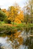 Árboles amarillos del otoño en el parque Imagenes de archivo
