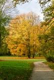 Árboles amarillos del otoño en el parque Imágenes de archivo libres de regalías
