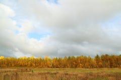 Árboles amarillos en el borde del bosque y del prado con la hierba seca Imágenes de archivo libres de regalías