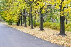 Árboles amarillos a lo largo del camino Imagen de archivo libre de regalías