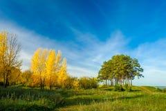 Árboles amarillos y pinos verdes en el borde del bosque Fotografía de archivo