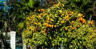 Árboles anaranjados Fotos de archivo